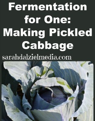 Natural Fermentation for One: Making Pickled Cabbage