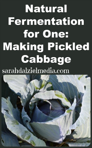 natural fermentation for one_making your own pickled cabbage